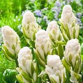 Последние лоты!! Цветы к 8 мартаТюльпаны Brooklyn (Бруклин) поражают свое необычностью,