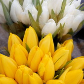 Луковица сортовых тюльпанов 5шт(5сортов)
