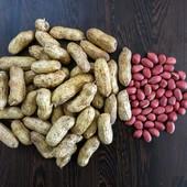 семена Арахиса (районированного под наши широты) лот 50 шт отборных семян
