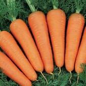 Морковь Аленка ранняя 200+ семян.