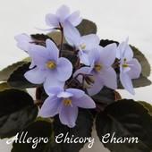 Allegro Chicory Charm (J. Stromborg) -   дітки