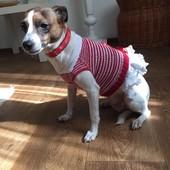 Нарядное платье для маленькой собачки,а может и кошечке