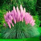 Пампасная трава розовая и серебристая , срок до 2024 года!Последняя упаковка! !