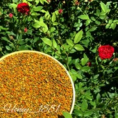 Пыльца (пчелиная обножка) Пилок Сбор 2020 г. Цена за 100 грамм