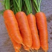 """Морковь 2 сорта - """" Яскрава"""" без серцевины!! и """" Артек"""" - много каротина!!! 2025-2026."""