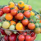 """Томат черри - микс """" Коктейль"""". Разноцветные плоды!!! До 2026 года. Скоро сеять на рассаду!!!"""