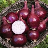 """Лук """"Рел барон"""" или """"Халцедон""""- на выбор!!Полноценный большой лук из семян в первый год! !"""