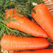 """Морковь 2 сорта - """" Шантанэ"""" или """" Каротель"""" - На выбор!!! До 2025-2026. Скоро сеять!!!"""