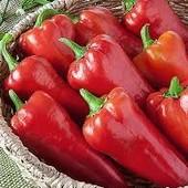 """Перец """" Подарок Молдовы"""". Проверен временем!!! Высокая урожайность! До 2026"""