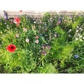"""Смесь цветов """" Помощник сада"""". Красота и помощь Вашему саду!"""