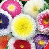 Семена Астры Лунное сияние. Смесь. Цветет с июля по сентябрь, на кусте до 15 раскрытых цветов.