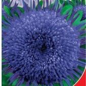 Астра Голубая звезда. Цветы до 12 см в диаметре, напоминают звезду.