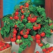"""Комнатный томат """"Лилли Лиз"""" 25шт."""