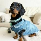 Primark Джинсовая рубашка на маленькую собачку ХС-С Не упустите!