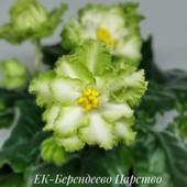 ЕК-Берендеево Царство - вкорінений листочок