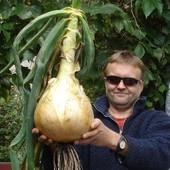 Однолетний лук: формирует луковицу за один сезон, без стадии сеянки, луковицы до 900 гр