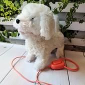 Очаровательная собачка, ходит, лает